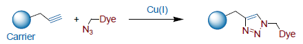 Cu-catalyzed cycloaddition