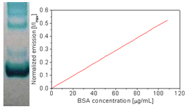 Fluorescence intensity of Square-655 vs. BSA concentration